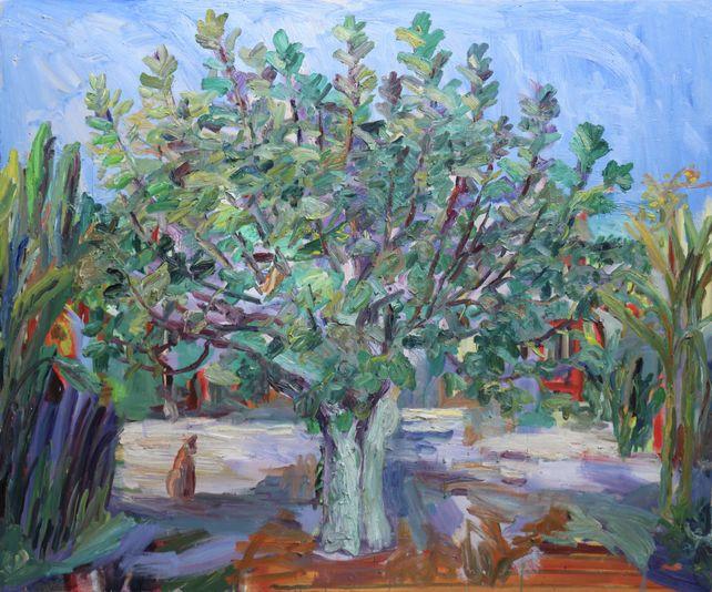 Fig tree in quarantine