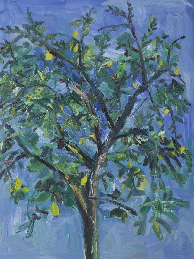 Lemon Tree in quarentine