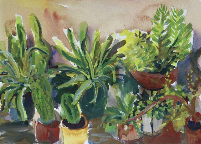 Cactus plants #2