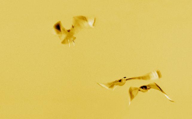 Gilded Flight