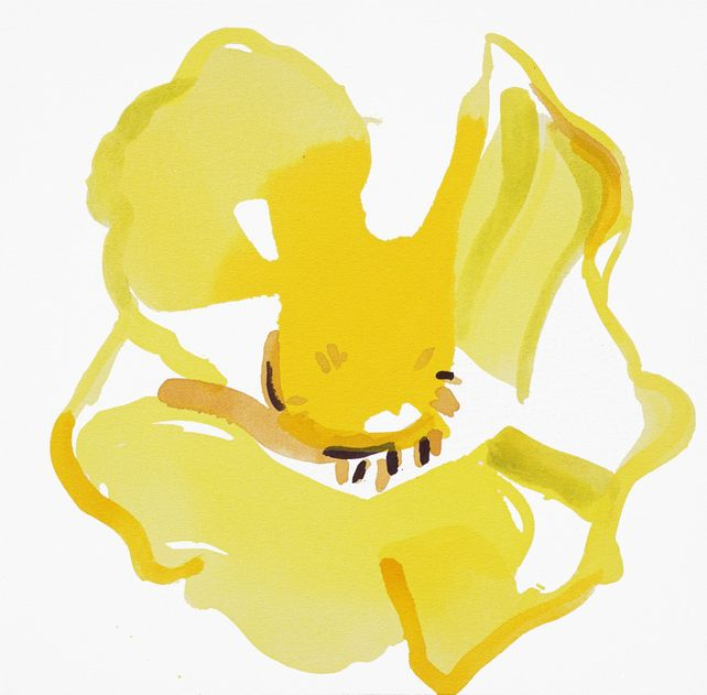 Yellow Poppy I