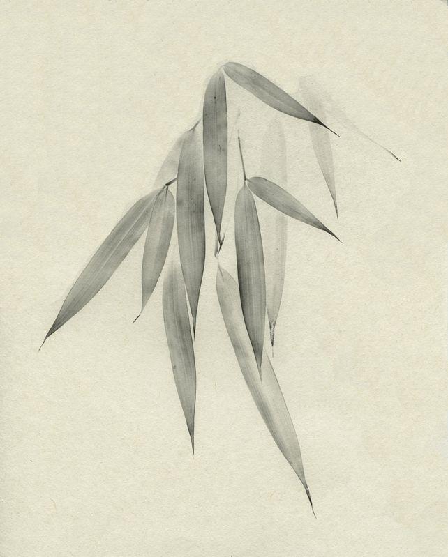 Take (bamboo)