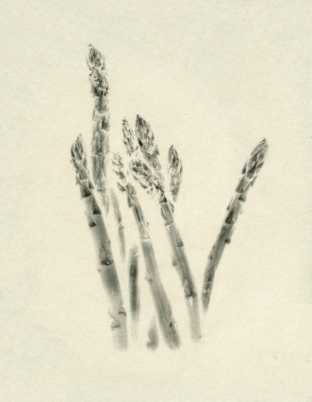 Asuparagsu (asparagus)