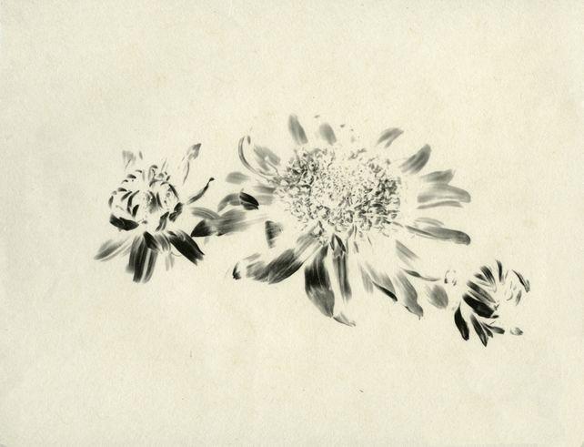 Kiku (chrysanthemums)