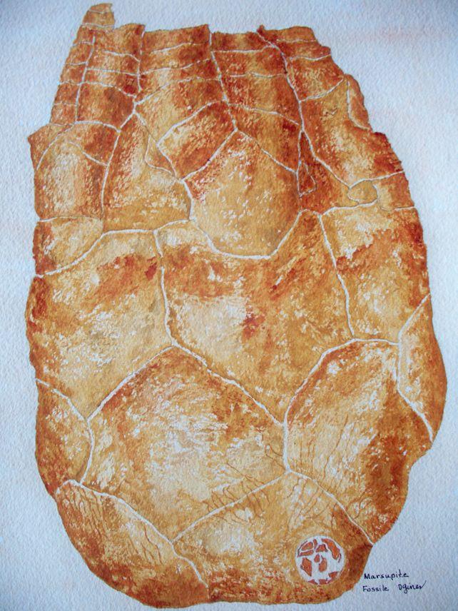 Marsupite Fossil