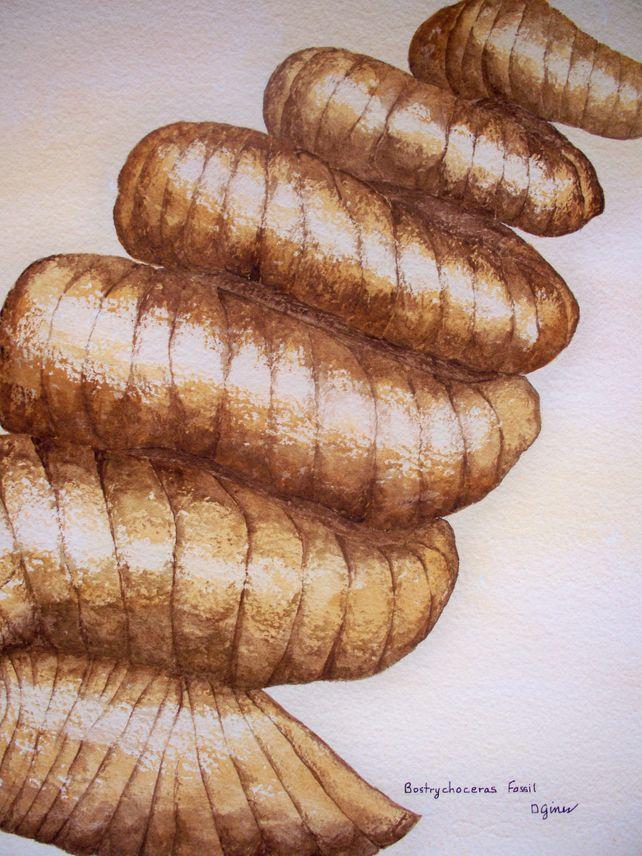Bostrychoceras Fossil