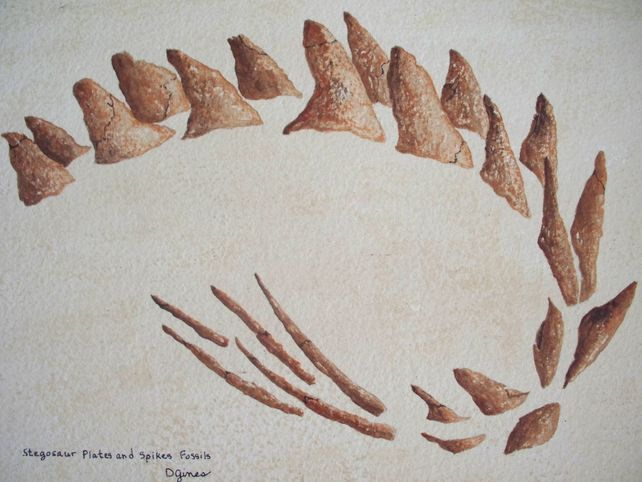 Stegosaur Plates and Spikes Fossils