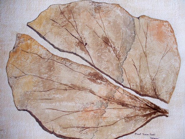 Trace Fossil Leaf